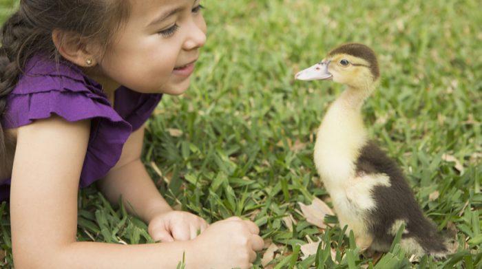 Naturnahe Kindererziehung bietet beispielsweise ein Bauernhofkindergarten. © Shutterstock, MintImages